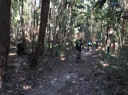 100 Mount Tinbeerwah Tewantin National Park Hovea Circuit Adventure Sunshine Coast