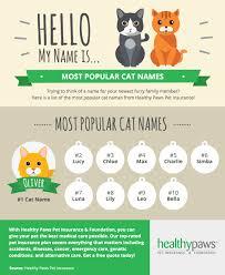 popular cat names popular cat names healthy paws pet insurance