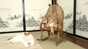 Cat Sitting In A Chair - Love Meow