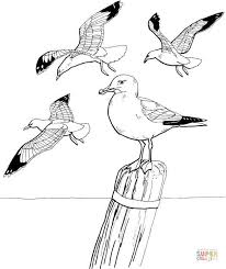 Click The Seagulls Coloring Pages To View Printable Version Or Color It Online Compatible With IPad And Android Tablets