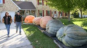 Wisconsin Pumpkin Patches 2015 by Newsela Pumpkins From Another Planet No Wisconsin