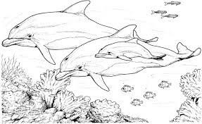 Download Dolphin Coloring Pages 22 Print