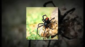 Preschool Halloween Spider Books by Children U0027s Book About Spiders Youtube