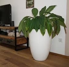 pflanzkübel für innenräume