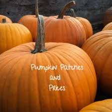 Hurricane Utah Pumpkin Patch by Oil Energy Law Today