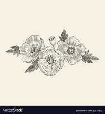 California Poppy Flowers Drawn And Sketch With Vector Image