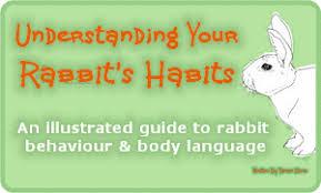 Can Bunny Rabbits Eat Pumpkin Seeds by Your Rabbit U0027s Diet Plants Vegetables U0026 Fruit
