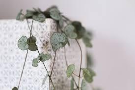 plantes vertes d interieur entretenir ses plantes vertes d intérieur astuces et conseils