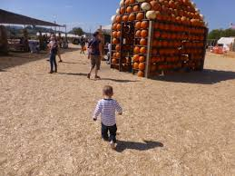 Faulkner Pumpkin Patch by Pumpkin Patch The Mitchell Adventures