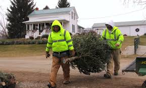 Best Solution For Live Christmas Trees by Raising Christmas Trees A Life Choice For Bellville Farmers