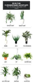 fice Design fice Plants No Light Best Indoor Plants For Low