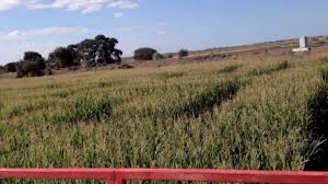 Del Oso Pumpkin Patch Lathrop Ca by Visit To Dell Osso Family Farms Corn Maze In Lathrop Ca Youtube