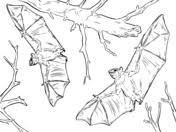 Rodrigues Fruit Bat Coloring Page