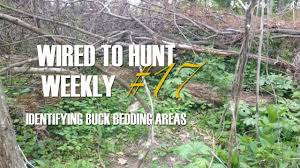 Wired To Hunt Weekly 17 Identifying Buck Bedding Areas