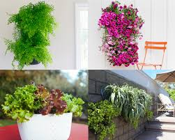 SCOUTED Living Wall Planters We Are Scout
