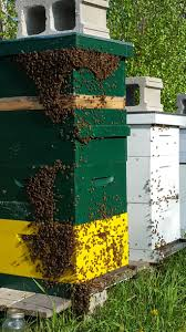 How To Set Up Your First Beehive - Runamuk Acres Farm & Apiary Hive Time Products A Bee Adventure For Everyone Bkeeping Everything You Need To Know Start Your First Best 25 Raising Bees Ideas On Pinterest Honey Bee Keeping The Bees In Your Backyard Guide North Americas Joseph Starting Housing And Feeding Top Bar Beehive Projects Events Level1techs Forums 562 Best Images Knees 320 Like Girl 10 Mistakes New Bkeepers Make Splitting Hives Increase Cookeville Bkeepers Nucleus Colony Or How A 8 Steps With Pictures