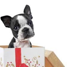 Adoptar Mascotas En Navidad Los Animales No Son Juguetes