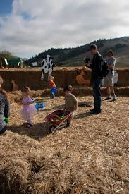 Visalia Pumpkin Patch by A Visit To Nicasio Valley Farms Pumpkin Patch Marin Mommies