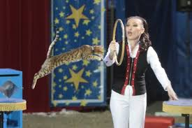 Comedy Barn Pigeon Forge TN Comedy Barn Theater In Pigeon Forge Tn Tennessee Vacation Animal Show Youtube A Christmas Promo Shows Meet The Cast Katianne Cat Leaps From 12 Foot Pole Video Shot At Hat Wool Amazing Animals Pet Danny Devaney Joins Fee Hedrick Family This Familys Adventure