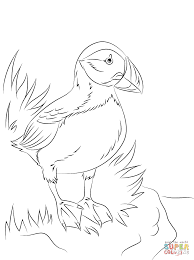 Click The Atlantic Puffin Seabird Coloring Pages