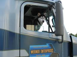 Wolf-Poison Is A Siberian Husky Who Rides Along With Werner ... Truck Trailer Transport Express Freight Logistic Diesel Mack Wner Manded By Court To Repay Driver Trainees 800k 1984 Peterbilt Tractor National Museum Of American History Enterprises Omaha Ne Rays Truck Photos Driving Schools Free Driver With Entry Level Salary And Professional Institute Home Movin Out New Opportunities Await At School Locations Gezginturknet Black 579 65919 Flickr Springfield Tn Tnsiam