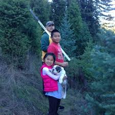Santa Cruz Ca Christmas Tree Farms by Black Road Christmas Tree Farms 18 Photos U0026 23 Reviews