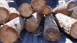Closeup Of Logs Being Unloaded From A Pickup Truck In 4K. A Man ... Delhi Truck Patparganj Truck Dealerstata In Delhi Justdial Center Hill Auto Sales Home Facebook Robby Collvins Radical 49 Chevy Pickup Heirloom Goodguys Hot News Lsn Afjrotc Lsnjrotc_mo952 Twitter Prpltaco 1998 Toyota Tacoma Regular Cabshort Bed Specs Photos Tips Ideas Get Your Favorite Item On Lsn Crossville Tn Luchador Takes Food Truck Burger Honors Elegant 20 Images Trucks New Cars And Wallpaper Unique 1729 Best Vw Pinterest
