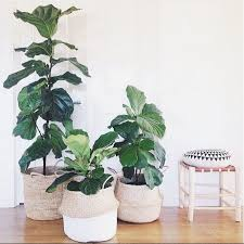 Best Pot Plant For Bathroom by The 25 Best Indoor Plant Decor Ideas On Pinterest Plant Decor