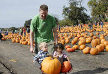 Pumpkin Patches Mankato Mn by Minnesota Boy Growing Up In Mid America Mid 20th Century