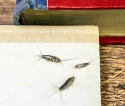 so wird silberfische wieder los infoportal zum thema haus