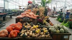 Pumpkin Patch Utah South Jordan by Richard Schmidt Schmidt U0027s Farm U0026 Greenhouse West Jordan Ut