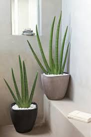 feng shui pflanzen über die schutz und komfortfunktion der