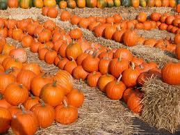 Pumpkin Patch Farms Mississippi by Whistling Well Farm