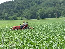 Pumpkin Patch Near Madison Wi by Heated Discussion Over Golden Spiral Treinen Farm Corn Maze
