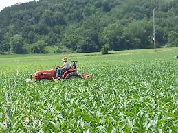 Lodi Pumpkin Patch by Heated Discussion Over Golden Spiral Treinen Farm Corn Maze