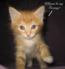 orange cat names name the kitty california 2