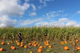 Papas Pumpkin Patch Hours by Crosby That U0027s Me In The Middle