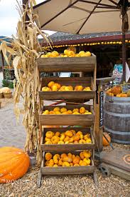 Pumpkin Patch Sf by Pumpkin Season At Earthbound Farm Stand Carmel Valley