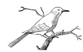 Print Robin Bird On Dead Tree Branch Coloring Page In Full Size