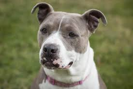 Best House Dogs That Dont Shed by Family Dogs New Life Shelter Adoptable Foster Dogs