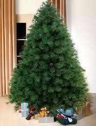 Scottish Fir Forest Green Christmas Tree 8ft Tall