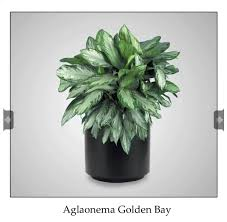 For my no window office Cubicle Friendly Plants