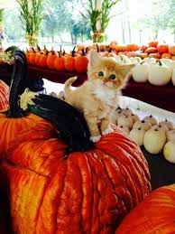 Pumpkin House Kenova Wv Hours by You Must Visit These 16 Places In West Virginia This Fall
