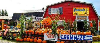 Seattle Pumpkin Patch by Puget Sound Farms With Pumpkin Patches Corn Mazes And U Pick Apples