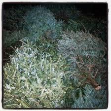 Flocked Christmas Trees Baton Rouge by 2015 Eco Cajun