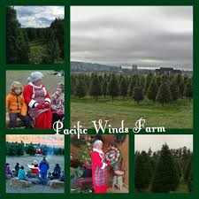 Christmas Tree Shop Florence Ky by The Christmas Tree Farm In Oak Harbor On Torpedo Road Will Be Open