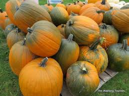 Fargo Moorhead Pumpkin Patches by Enchanted Acres More Than Pumpkins In North Iowa The Walking