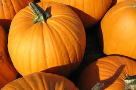 Napa Pumpkin Patch Hours by Market Street The Woodlands