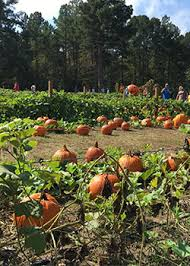Pumpkin Patches In Arkansas by Pick Your Own Pumpkins And Play Area At Motley U0027s Pumpkin Patch And