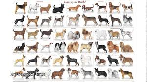 Non Shedding Small Dog Breeds List by Small Dog Breeds With Pictures A Z Dog Breeder
